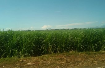 さとうきび畑に行ってきました。のイメージ